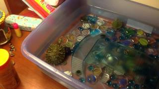 видео Как ухаживать за черепахами в домашних условиях