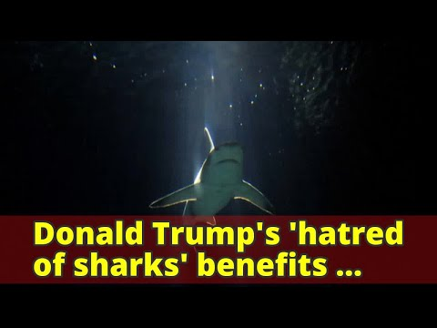 Donald Trump's 'hatred of sharks' benefits conservation charities
