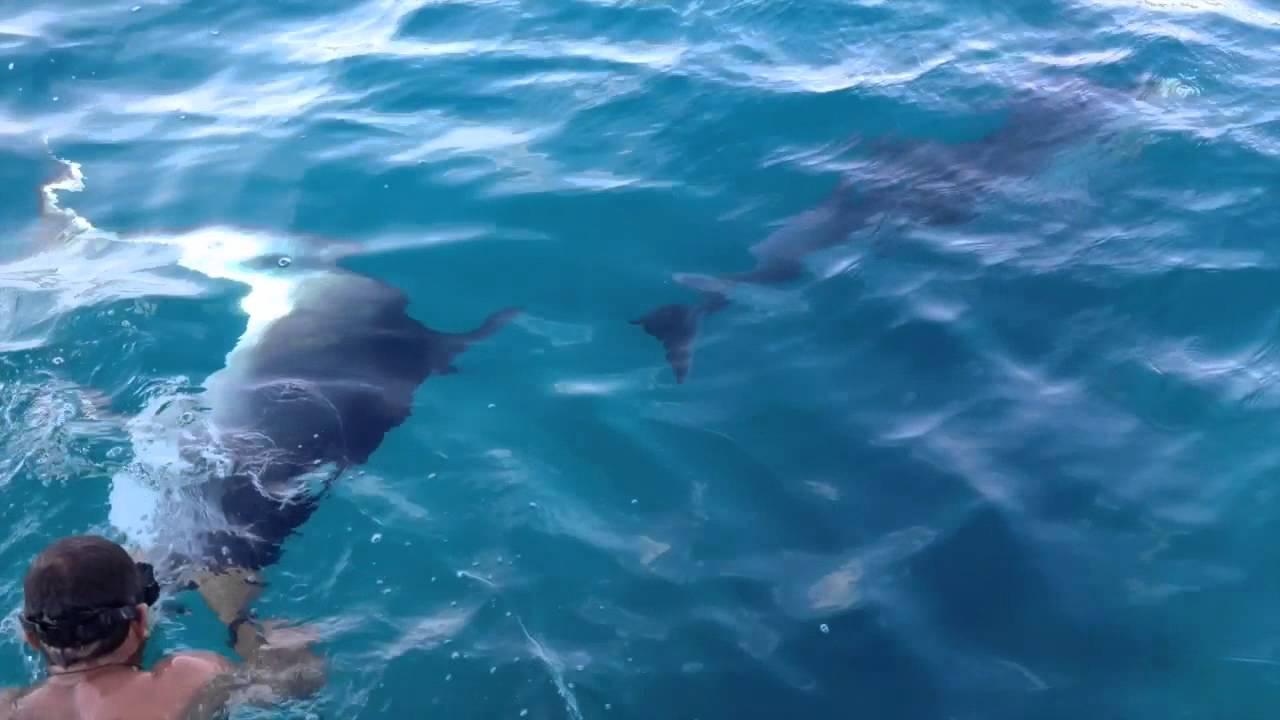 Sardegna 2013 bagno con i delfini a golfo aranci youtube - Bagno coi delfini ...