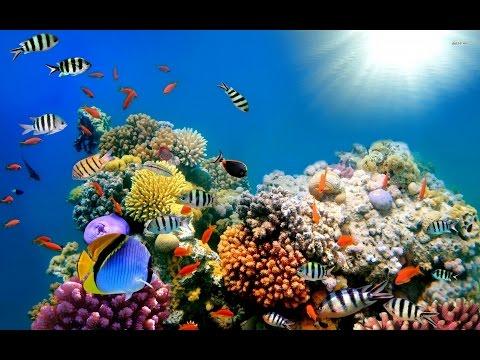 Doku in HD Korallenriffe in Gefahr