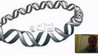 Eukaryotic Genome