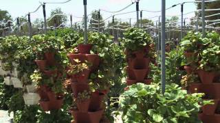 Alegria Fresh - Hydroponic Demonstration Farm, Orange County Great Park