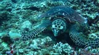 오키나와 바다 거북, Canon Powershot D3…
