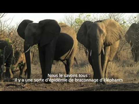 Limpopo : biodiversité (partie 3)