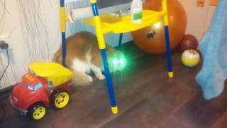 Кот боится человека-паука