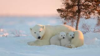 Животные Севера.