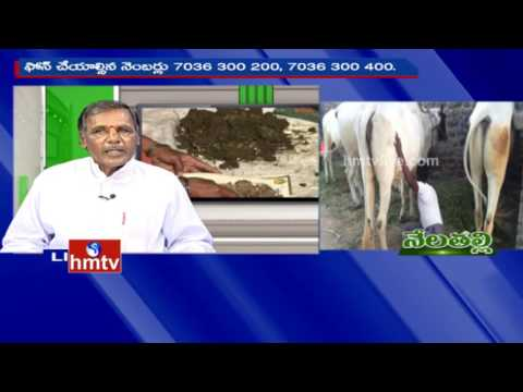 Ideal Farmer Satti Reddy Tips For Organic Cultivation | Nela