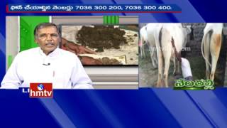 Ideal Farmer Satti Reddy Tips For Organic Cultivation   Nela Talli   HMTV
