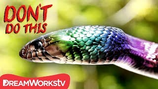 A Snake With RAINBOW SCALES | DON'T DO THIS