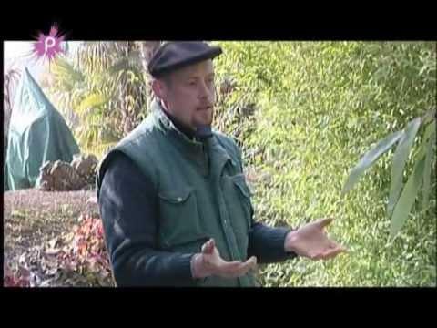 Tout savoir sur le bambou p pini res huchet youtube - Tout sur le bambou ...
