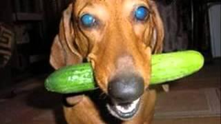 721 животные приколы видео смотреть бесплатно