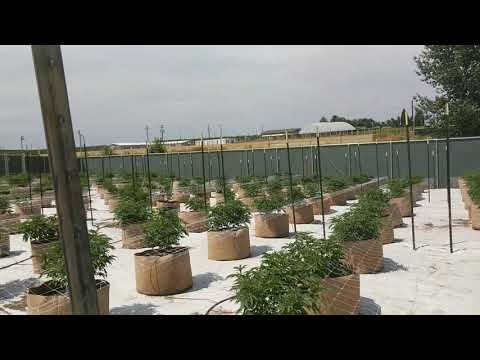 Outdoor Cannabis Facility in Eastern WA
