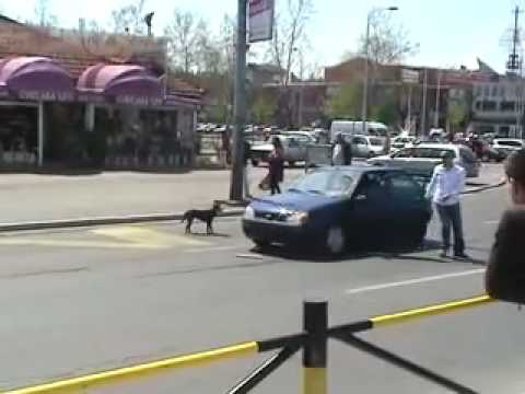 Crazy dog removing registration number!