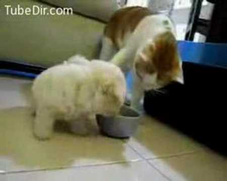 a-puppy-chewing-off-a-cats-ear