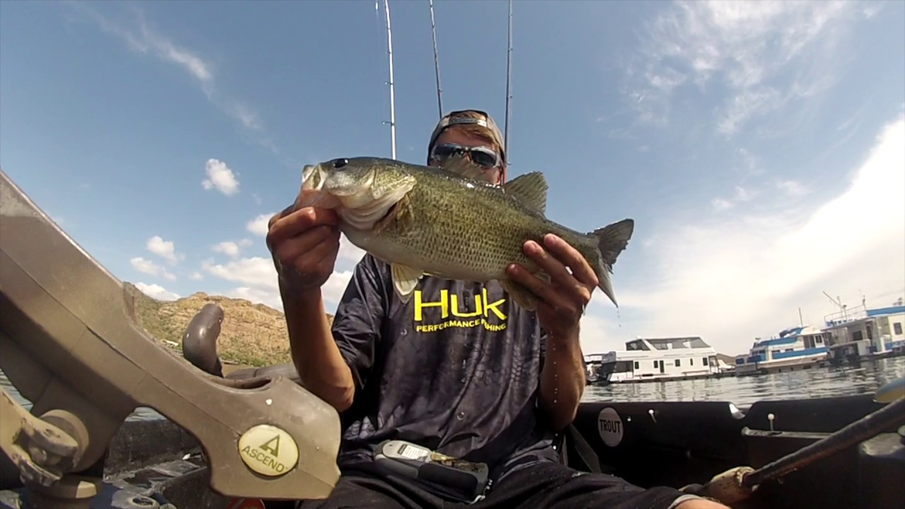 Kayak bass fishing arizona youtube for Bass fishing az