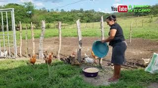 La vida real en el campo la esposa trabajadora  el salvador en el campo