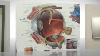 (303) 471-5263   Find colored contacts & best optometrist @ Highlands Ranch's