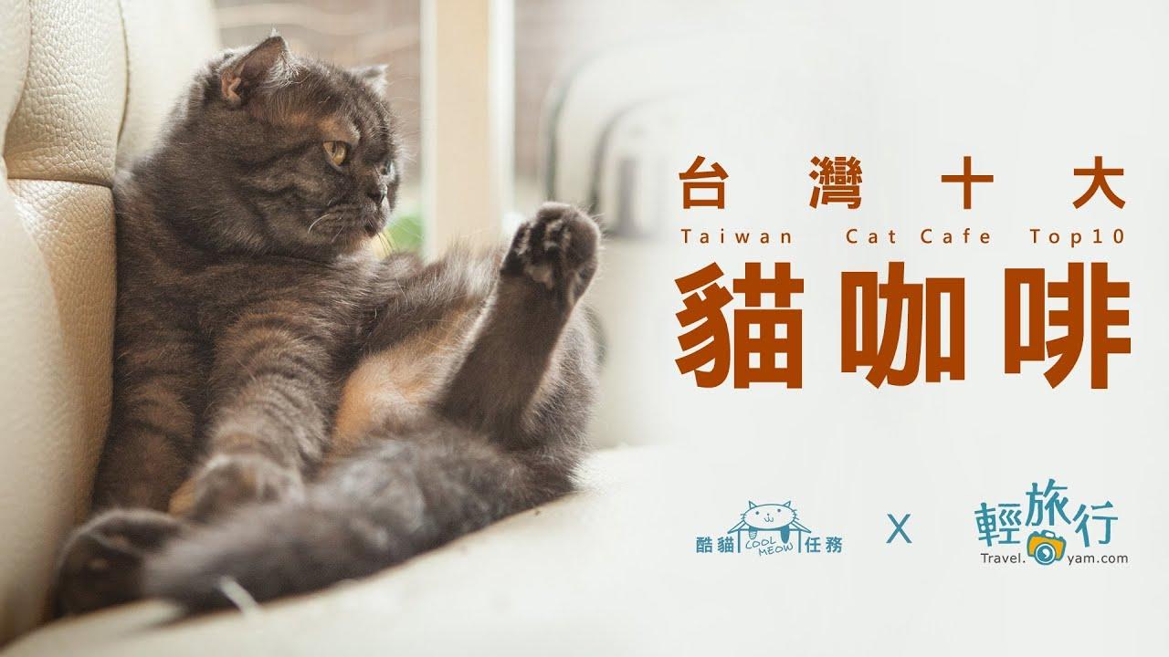 【臺灣十大貓咖啡】EP05 - 貓爪子咖啡 - YouTube