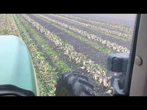 Vadjenje šećerne repe 2017