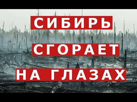 Сибирские леса горят.