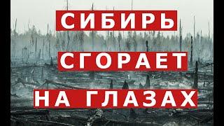Сибирские леса горят. Люди задыхаются. Анатолий Быков о том, почему леса не пытаются тушить?