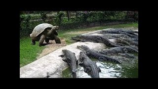 Gambar cover Kamera Kaydı Olmasaydı Kimse İnanmayacaktı - Hayvanların Yardımına Koşan 6 Hayvan