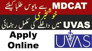 How to Apply Online in University of Veterinary and Animal Sciences (UVAS) 2019