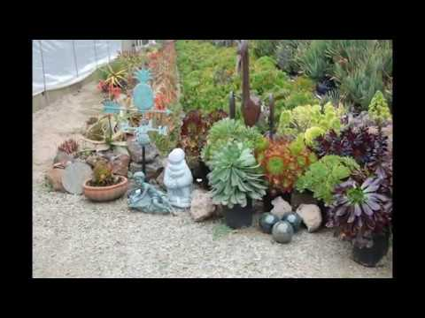 succulent garden design YouTube