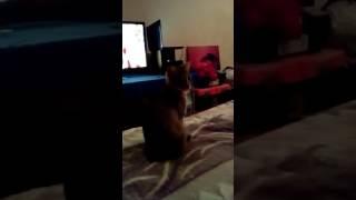 Приколы с кошками)))А ты меня любишь?!))))) хаххах))))