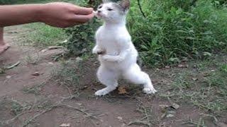Gato cruzado por conejo crias