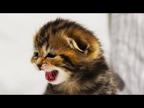 "Mom Cat Meowing and Talking for her Cute Kittens | Generation ""O"""