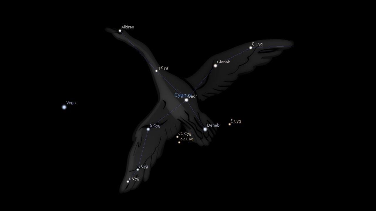 лебедя созвездие фото