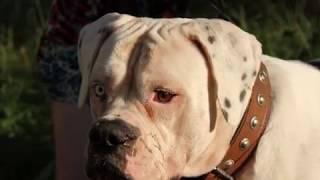 Курская полиция ведет проверку по факту убийства собаки