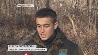 В Приморье борются с незаконными рубками леса