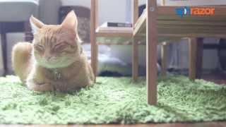 Jackson Galaxy, the crazy cat lady