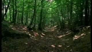 Il cammino dell'alleanza (Prima parte)