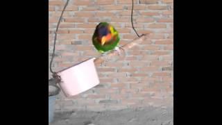 Burung Bisa Bicara