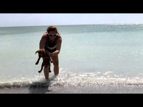 Cute Irish Terrier Puppy's First Beach Day