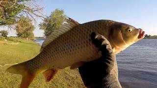 Рыбалка на сазана в Астрахани
