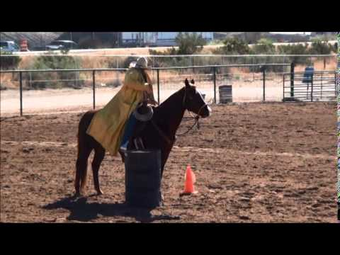 how to teach your horse to lay down natral horsemenship