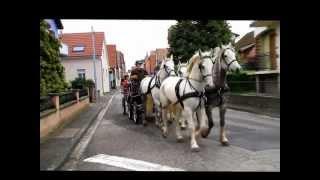Attelage à 4 chevaux arabo-boulonnais avec calèche + remorque