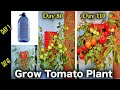 - Very unique Method to Grow Tomato Plants in 5 liter Hanging Bottle  Vertical Vegetable Gardening