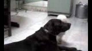 Porno canino