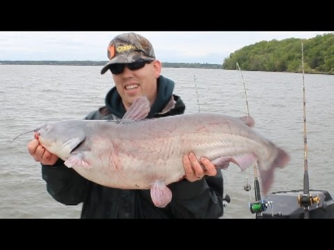 Epic cat fishing Potomac Va. with fishing guide Chris Eberwien
