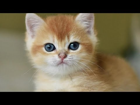 Tiny Adorable Kittens Will Lighten Up Your Day