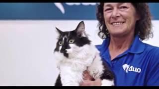 2018 ASPCA Cat of the Year: D.O.G.