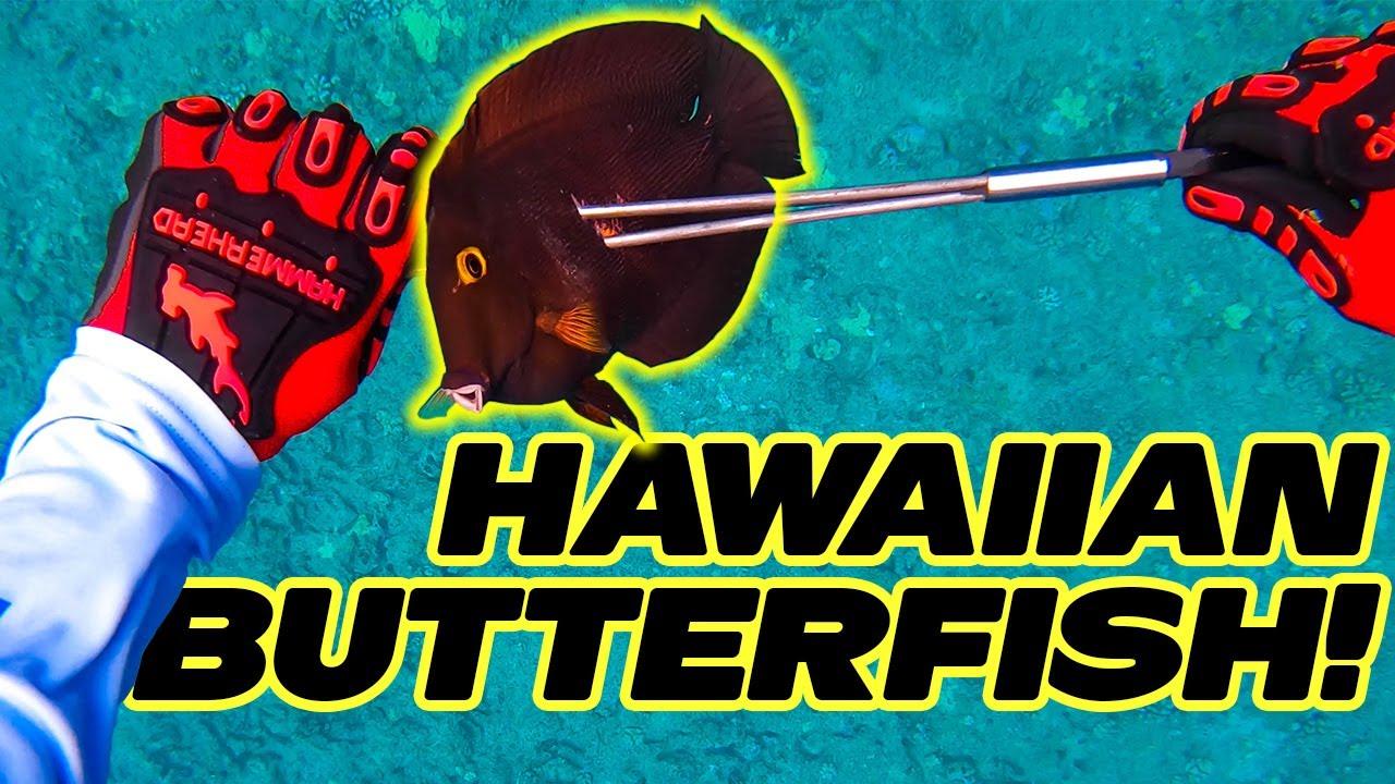 Spearfishing Hawaii Catch and Cook - Hawaiian Sling Spearfishing - Fishing In Hawaii - Kole Diving