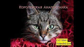 """Эрнест Сетон-Томпсон """"Королевская Аналостанка"""""""