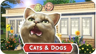 Vpn To Play Sims  Cats And Dogs