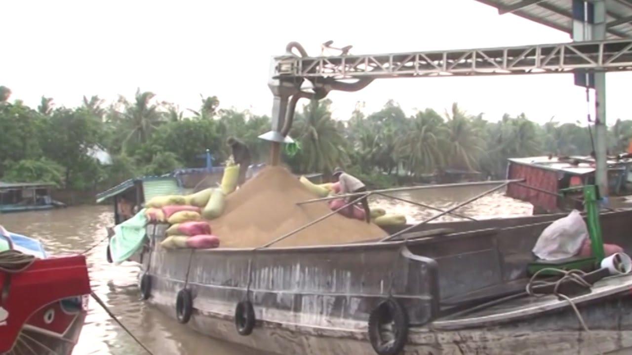 Phóng Sự Việt Nam: Cần Thơ đầu tư hoàn thiện chuỗi ngành hàng lúa gạo